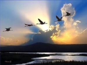 Большие птицы