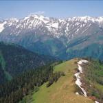 Государственный заповедник, в лесах, алтайская белка, зеленый корм, лесные жителя