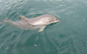 Дельфиненок
