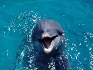 Морское животное