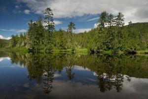 Лесной остров