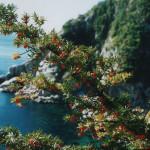 Дерево тис