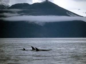 Млекопитающие водные животные