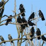 Воробьинообразные птицы