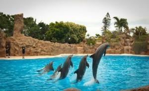 Дрессировка дельфинов