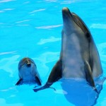Животные дельфины