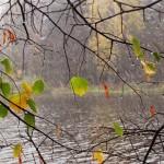 Осенние дожди