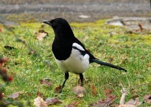 Чудо птица