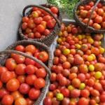 Овощная культура