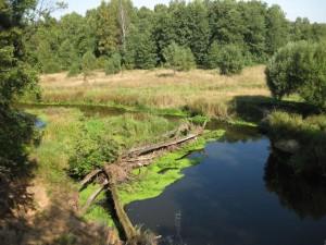 Загрязнение пресной воды