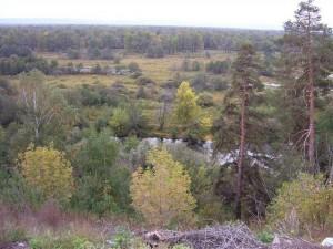 Пойменные леса