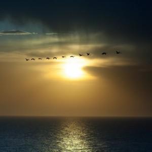 Птицы лебеди