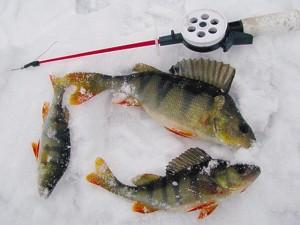 Рыбалка на окуня в январе