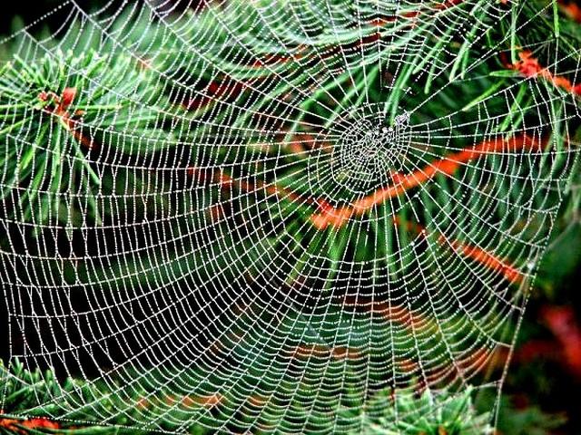 для рыбалки фото сеть-паук