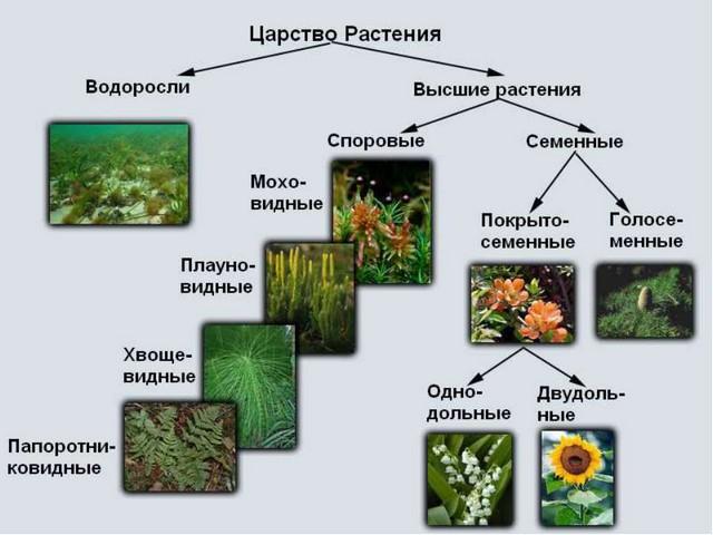 Царство растений