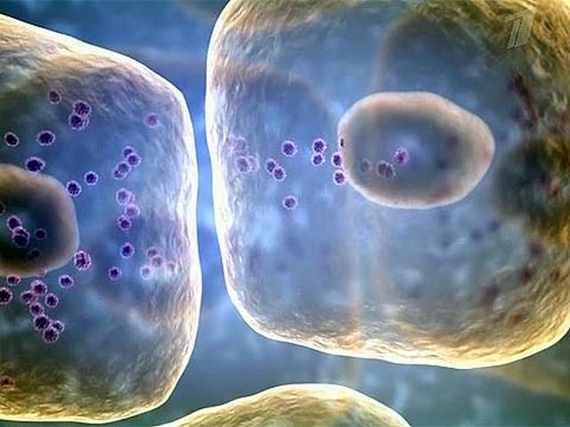Клетки вирусов