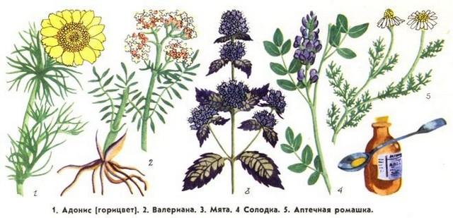 какие растительные препараты понижают тревогу