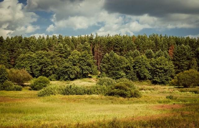 Могучий лес