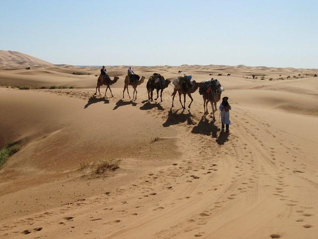 Поступь верблюдов