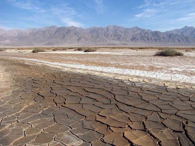 Солончаковые почвы