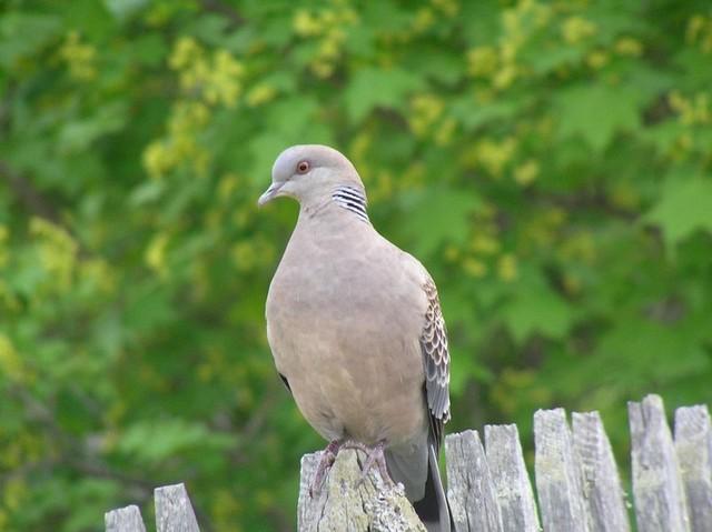 Дальнозоркость птицы