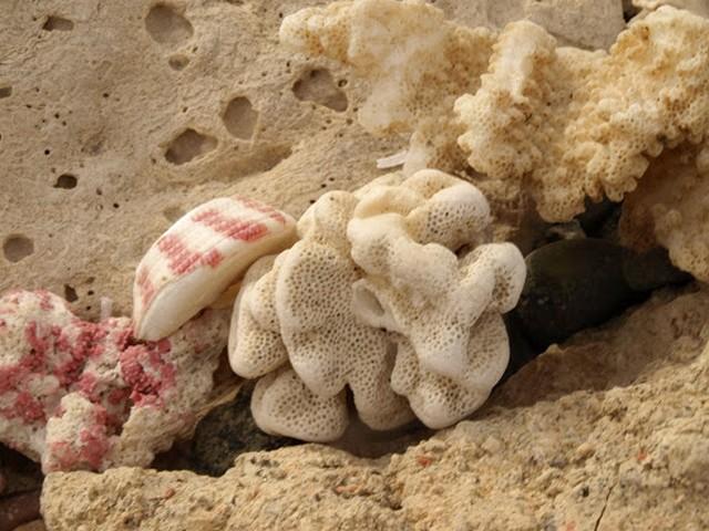 Куски кораллов