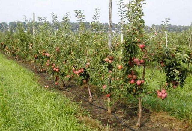 Развитие садоводства