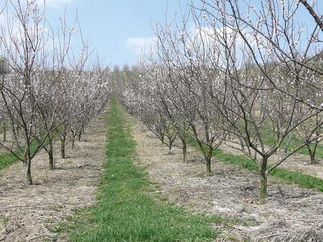 Сельскохозяйственные посадки