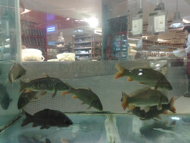 Карпообразные рыбы