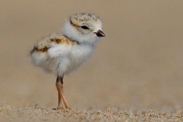 Маленький птенчик