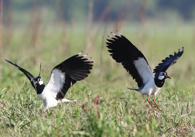 Смелые птицы