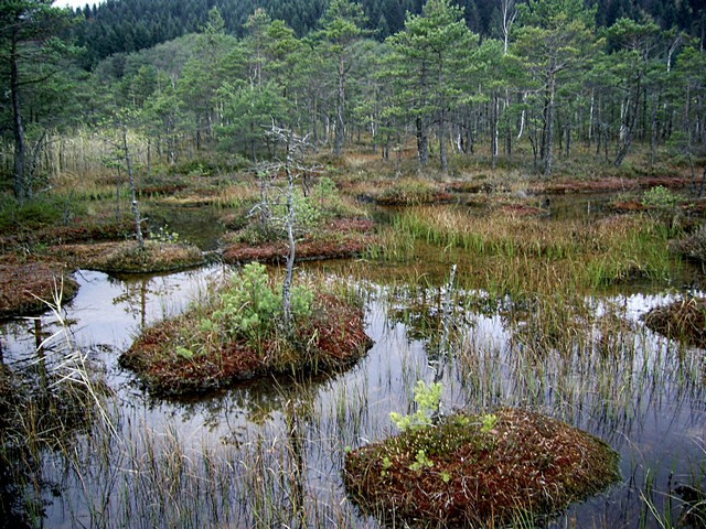 Топкие болота