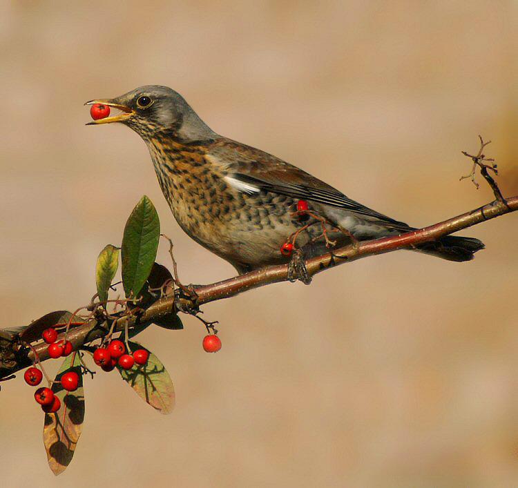 насекомоядные птицы распространяют плоды и семена растений в природе вариантам таких конструкций