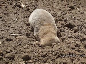 15 невообразимо громадных животных, которые на; самом деле существуют