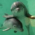 Дельфиненок родился