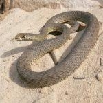 Ядовитая змея стрелка в бутылке