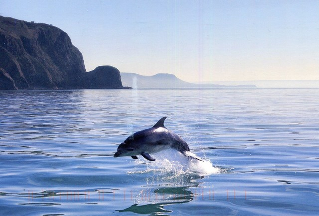 Морской дельфин