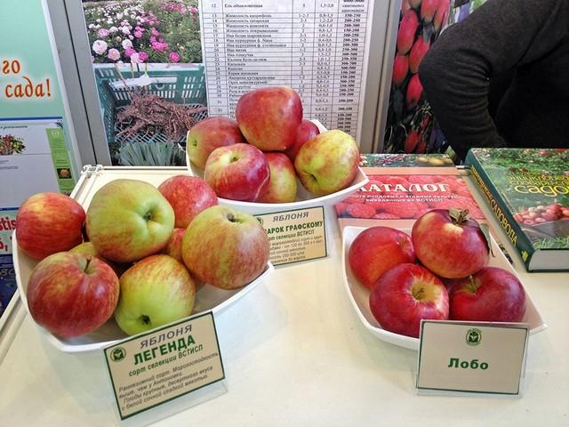 Чудесные яблоки