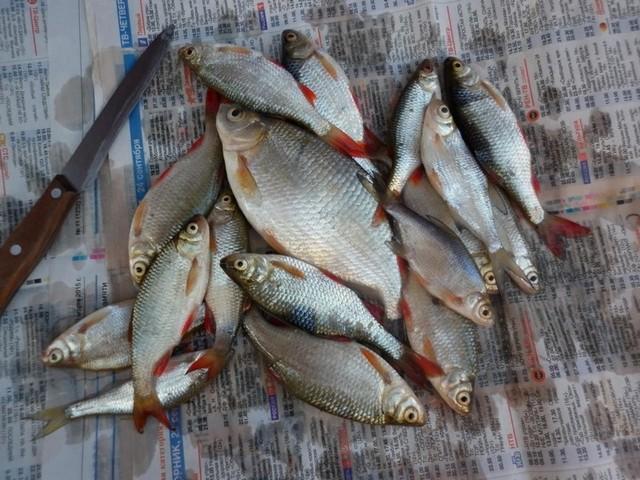 Мелкие рыбешки