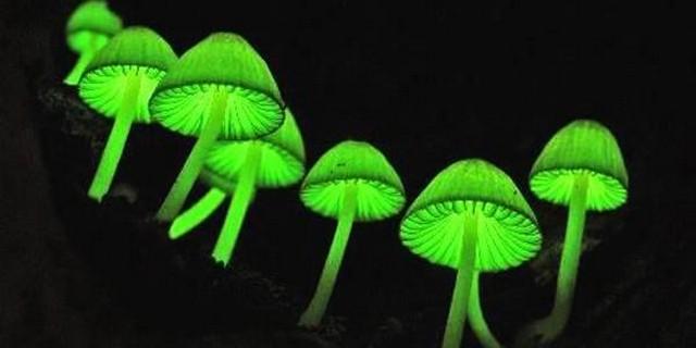 Неоновые грибы