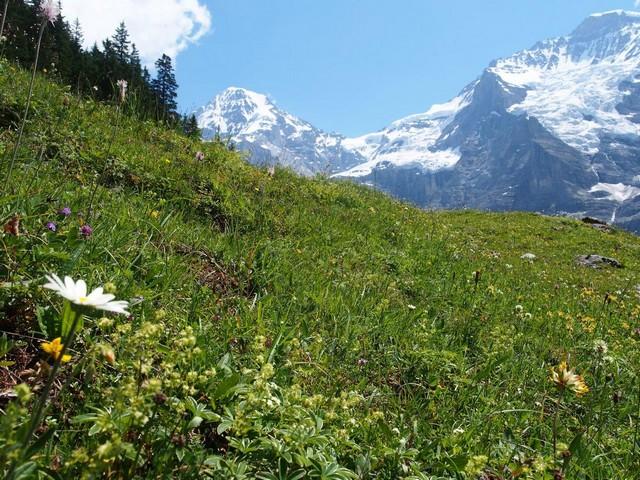Растения горных пастбищ