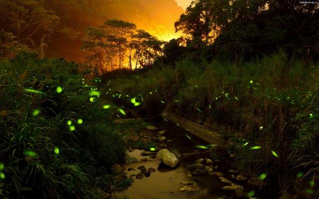 Светящиеся насекомые