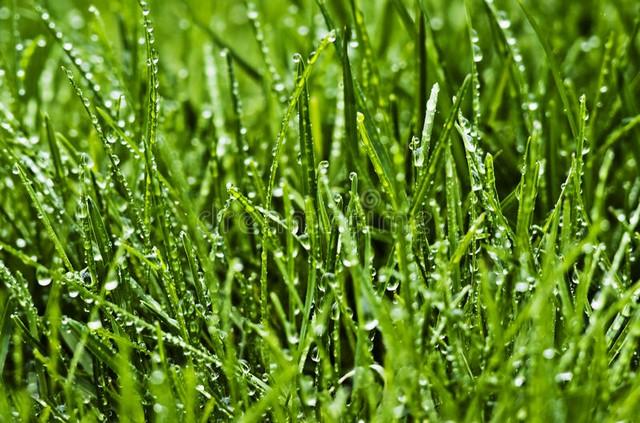 По мокрой траве