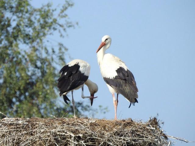 Знакомые птицы