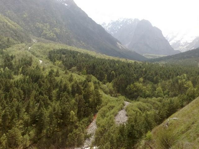 Горные леса