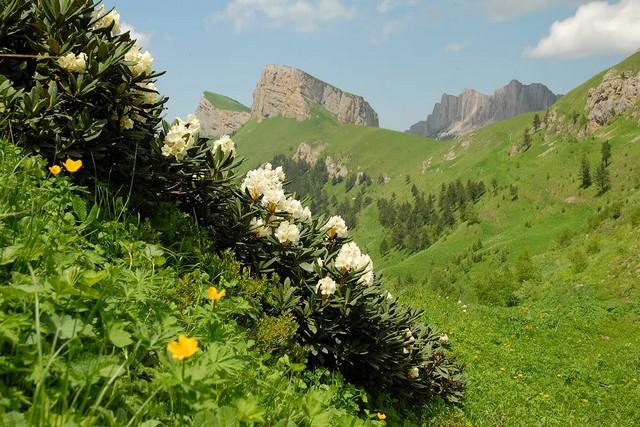 Эндемик Кавказа