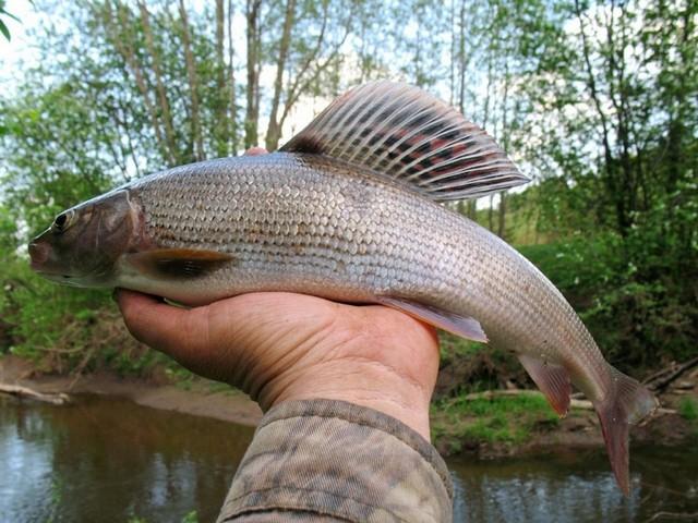 Дело рыбачье