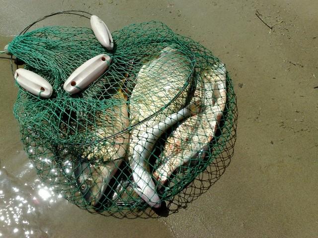 Теплолюбивые виды рыб