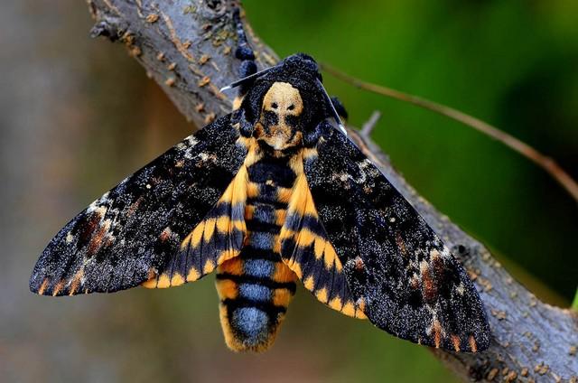 Чудесное насекомое