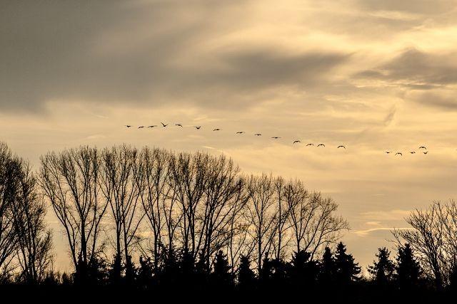 Сезонные миграции